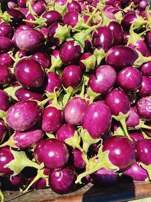 India Eggplant 圓圓小茄子