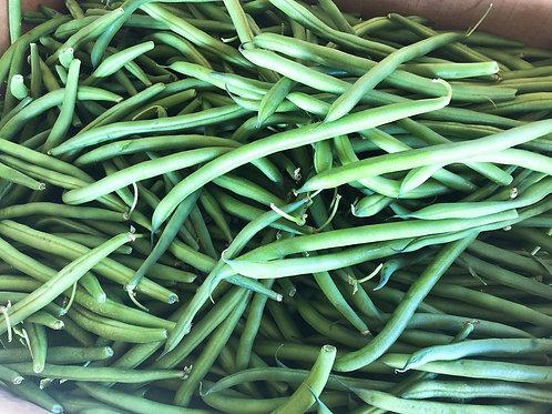 Green Bean 四季豆