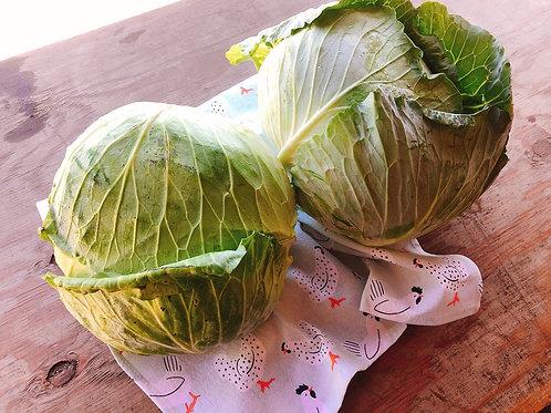 Natural Grown Taiwanese Cabbage美國產台灣梨山高麗菜(小顆約)