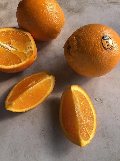 Navel 蜜橙 一份5顆