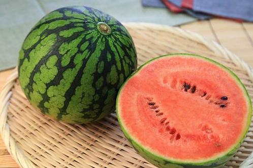 Mini Red Watermelon小顆紅西瓜