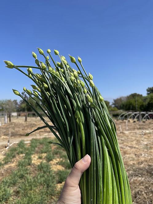 Chive Flower 韭菜花 一份0.5磅