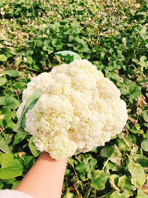 Cauliflowerw鬆花菜一顆