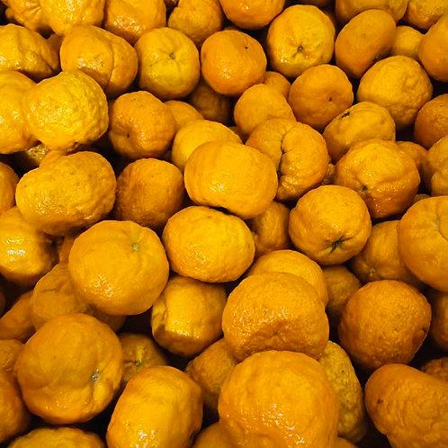 Golden Nugget 黃金醜橘