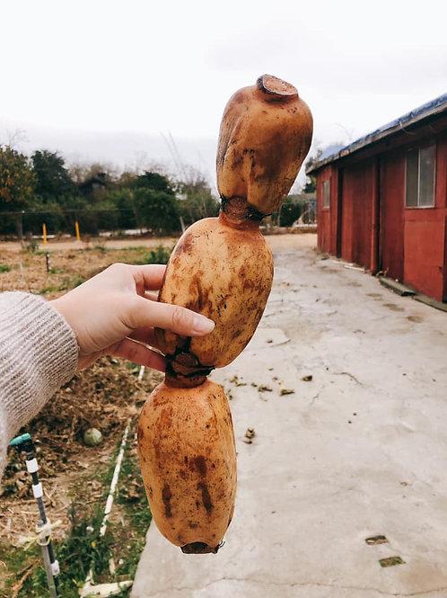 Lotus Root Mexico 無農藥新鮮蓮藕