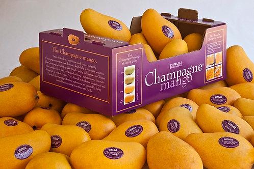 Champang Mango 芒果 一箱約6顆