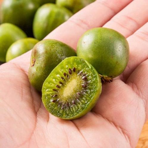 Mini Kiwi Berry紐西蘭迷你奇異果 一份兩盒
