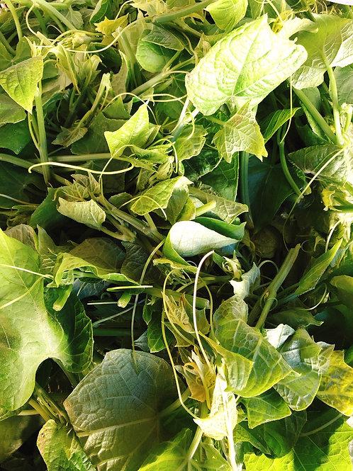 U-Gofresh Chayote Leaf U-Gofresh龍鬚菜