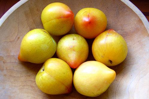 Lemon Plum 智利檸檬蜜李