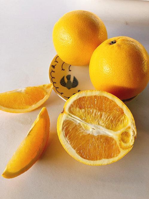 Navel Orange 臍橙
