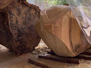 回到石器時代🤣利用樹枝運送重樹