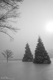 Icy Yews, Eden Farm