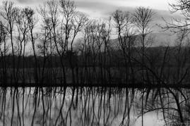 Peaceful Sihouettes, Fairfield