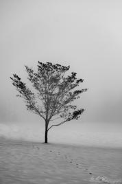 Footprints in the Snow, Eden Farm