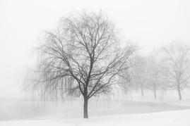 Snowy Fog, Eden Farm