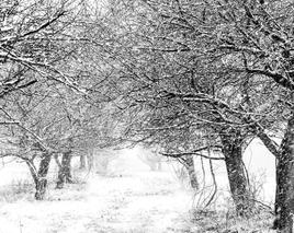 Orchard Path, Fairfield