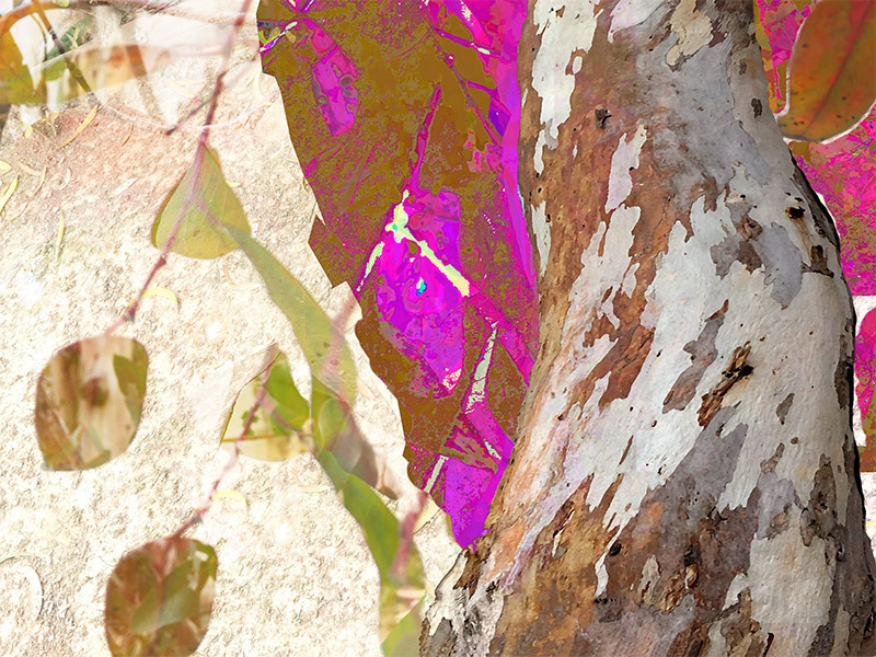Up in the trees - original digital art composite - eucalyptus trees and leaves swaying in breeze San Diego, California, by artist Darla Nyren, Breeze Hill Art, www.breezehillart.com