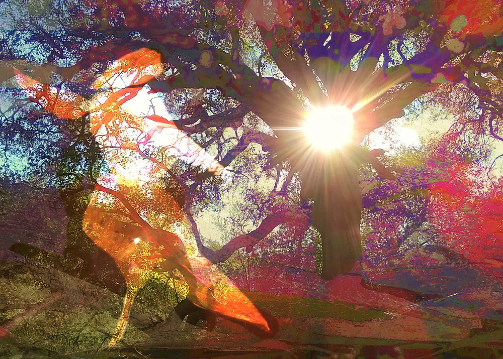 Dancing in the park - original digital art composite - oak trees sun burst Buena Vista Park, San Diego, California, by artist Darla Nyren, Breeze Hill Art, www.breezehillart.com