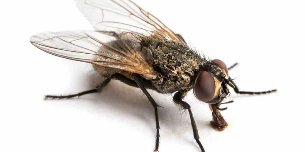 De l'existence et des mouches