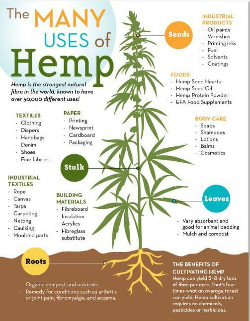 Carolina-Coops-Hemp_Infographic.jpg