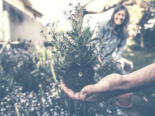 Cato_Korrekt_Kompostieren_Blumen