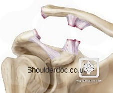 shoulderdoc_rockwood_5.jpg
