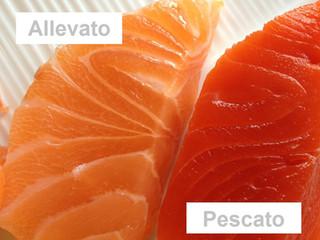 Il Salmone è una buona fonte di Omega3? Dipende!