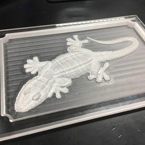 Lizard Mockup