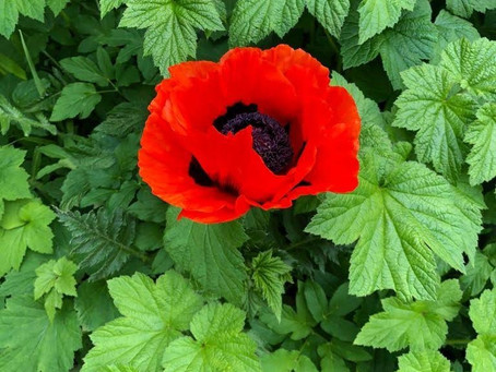 A remembrance service for care homes