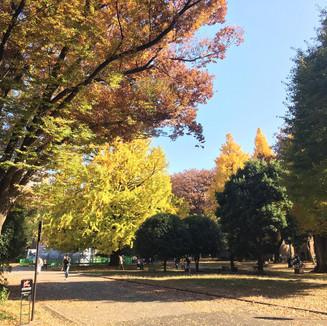 The University of Tokyo