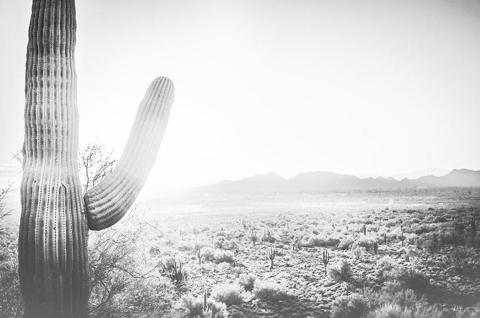 Desert Cactus Landscape_edited.jpg