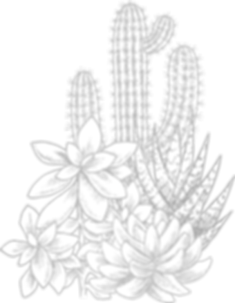 Cactuses_edited.png