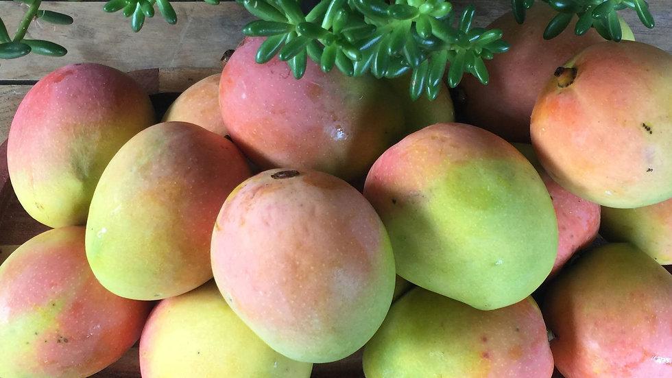 Mango KP Certified Organic - each LARGE