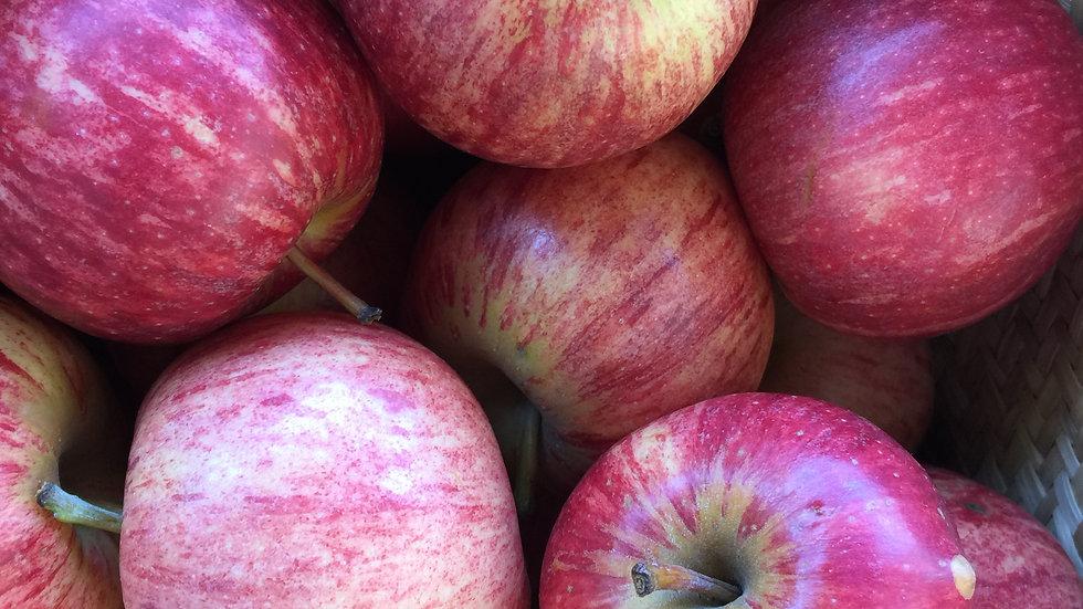 Apples  Gala Certified Organic -1kg