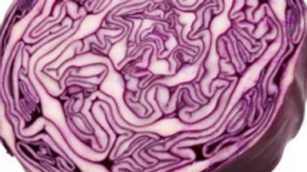 Cabbage Red Whole - Certified Organic