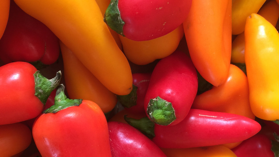 Capsicum mixed colour snacking - 200gm Certified Organic