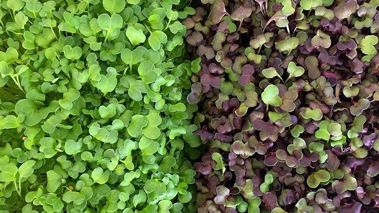Micro greens - 80gm mixed bag