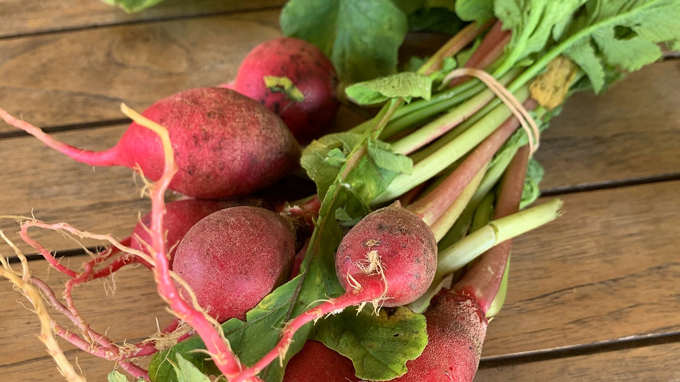 Radish Certified Organic - bunch