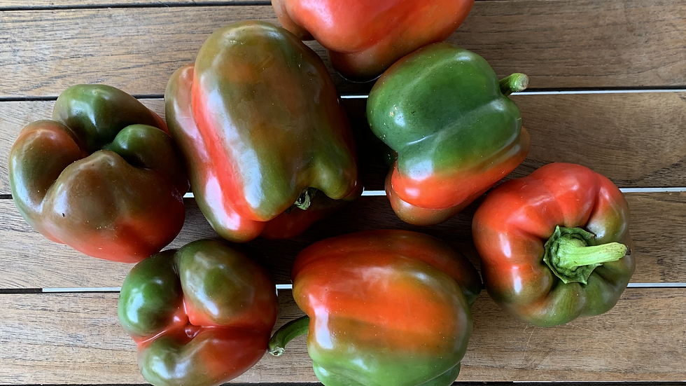 Capsicum Coloured ( mostly green)  - 250gm Certified Organic