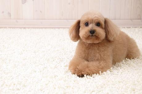 Carpet Cleaner Las Vegas