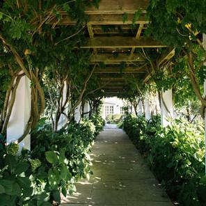 Bedell Cellars Vineyard Wedding