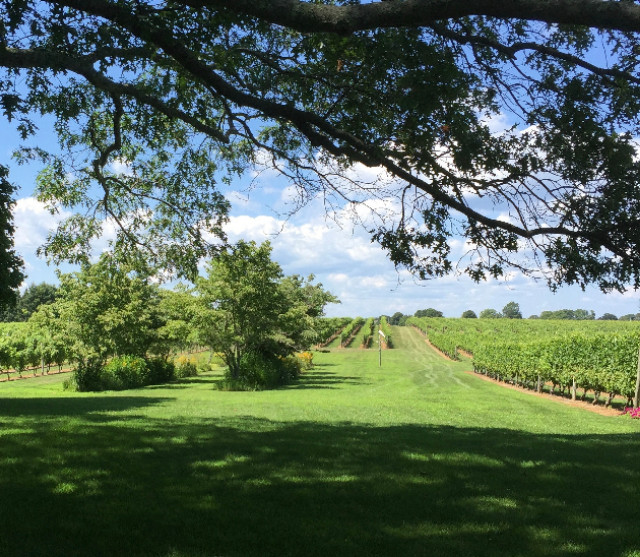In the middle of a Vineyard