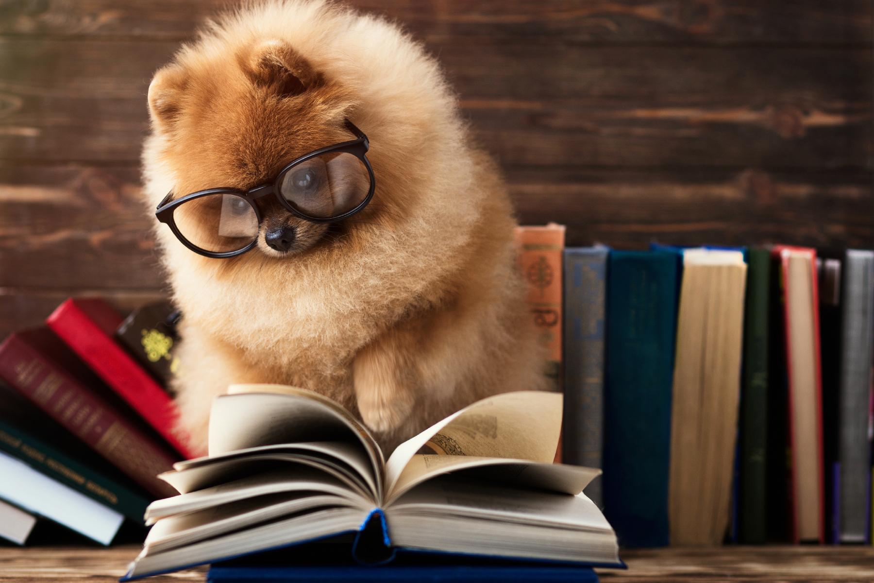 pets_in_books_header.jpg