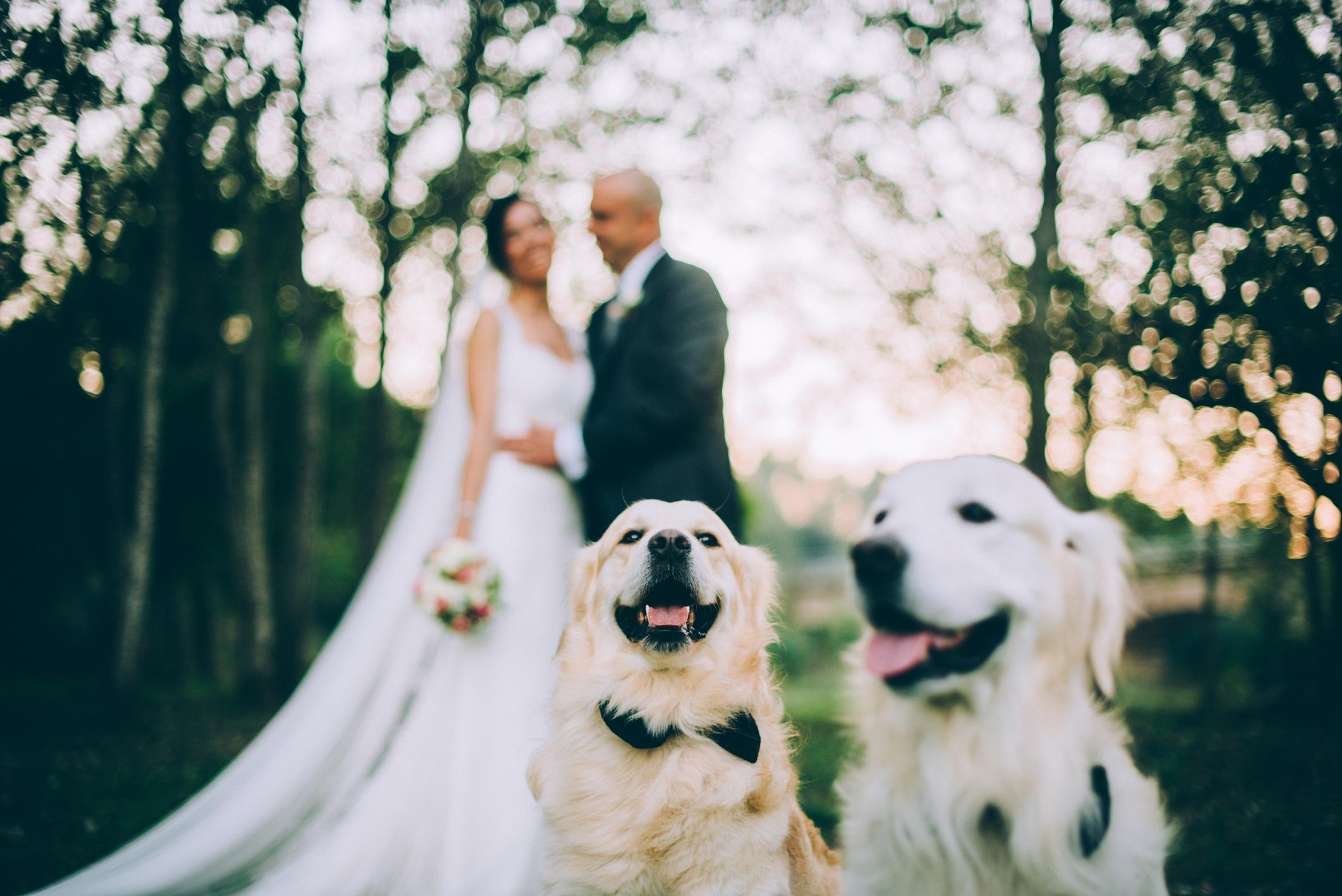 boda con perros-29