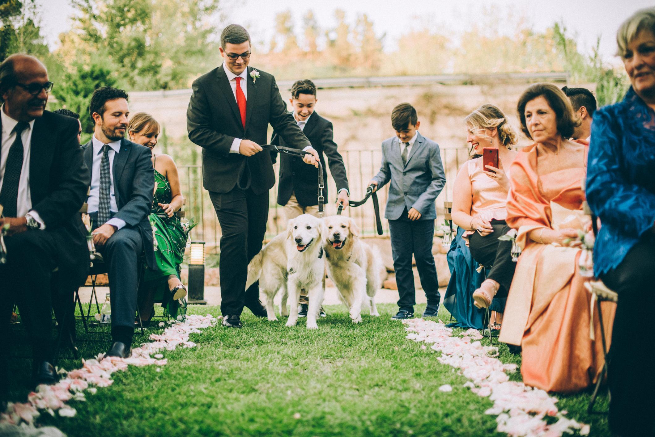 boda con perros-22