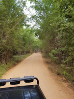 Enjoy a ride in the wild in your private jeep