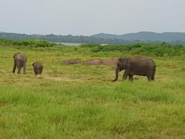 Get up close to elephant herds