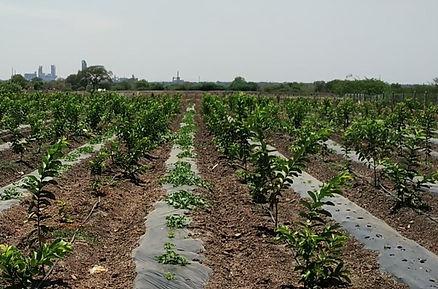 at Rehoboth Organic Farms, Ariyalur.jpg