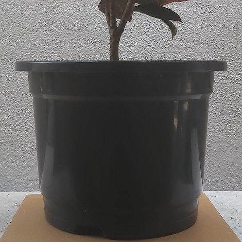 """Plastic Nursery Pots - 6"""""""