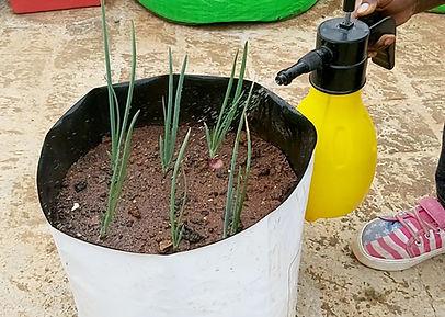 Onions - Pestcontrol.jpg